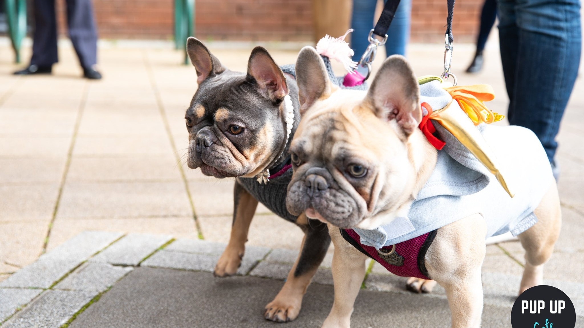 Frenchie Pop Up Cafe – Solihull
