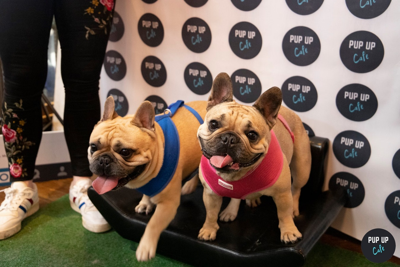 Frenchie Pup Up Cafe – Southampton