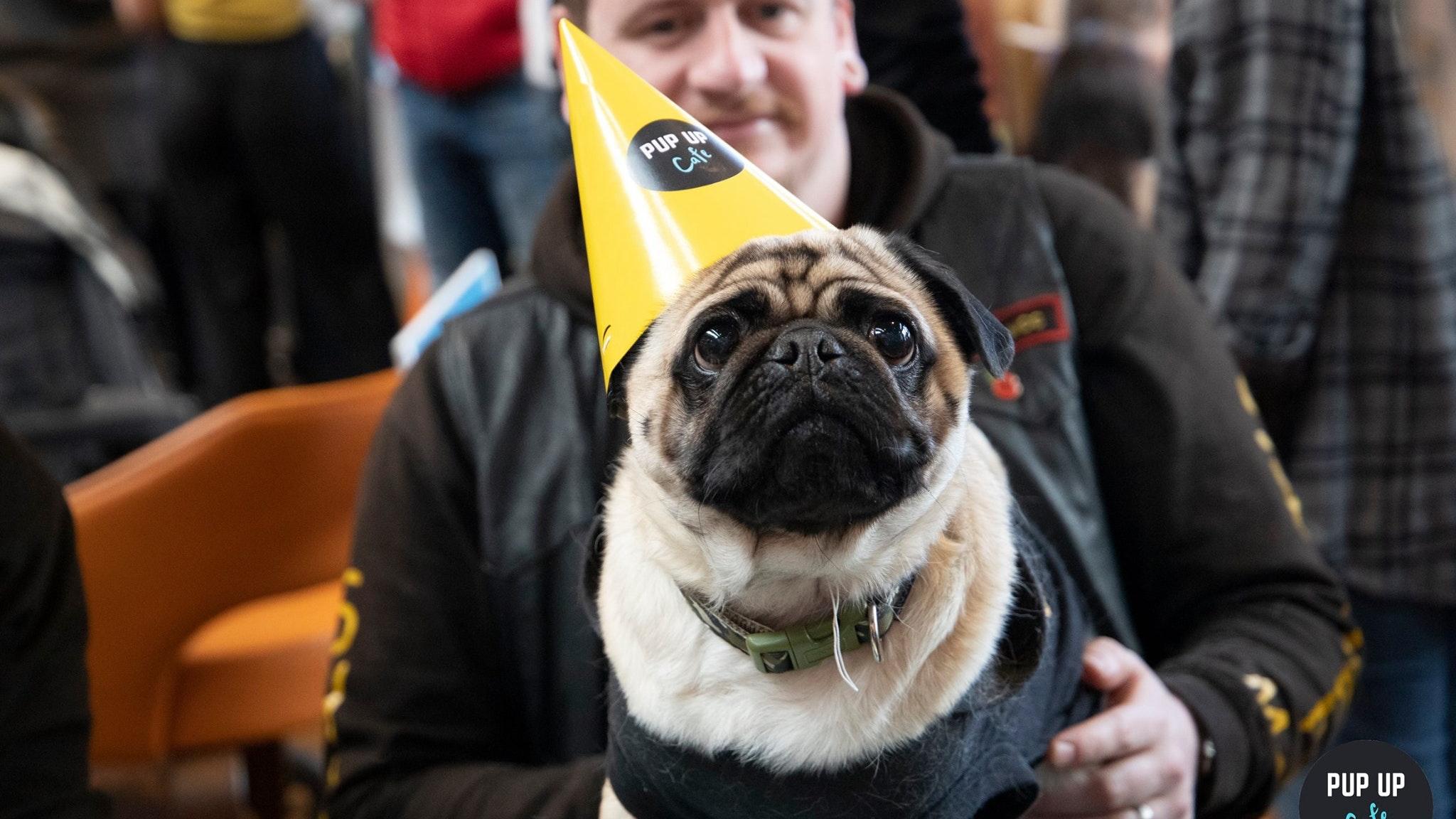 Pug Pop Up Cafe – Southampton