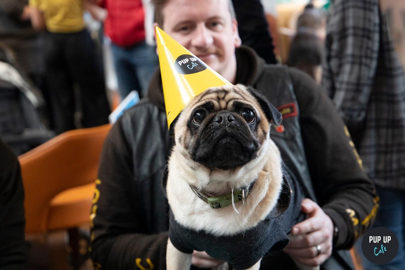 Pug Pup Up Cafe – Southampton