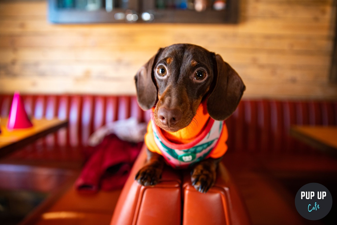 Dachshund Pup Up Cafe – Liverpool
