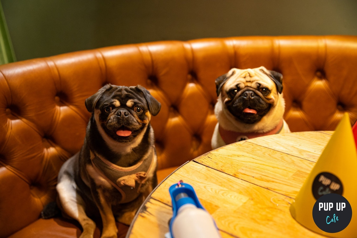 Pug Pup Up Cafe – High Wycombe