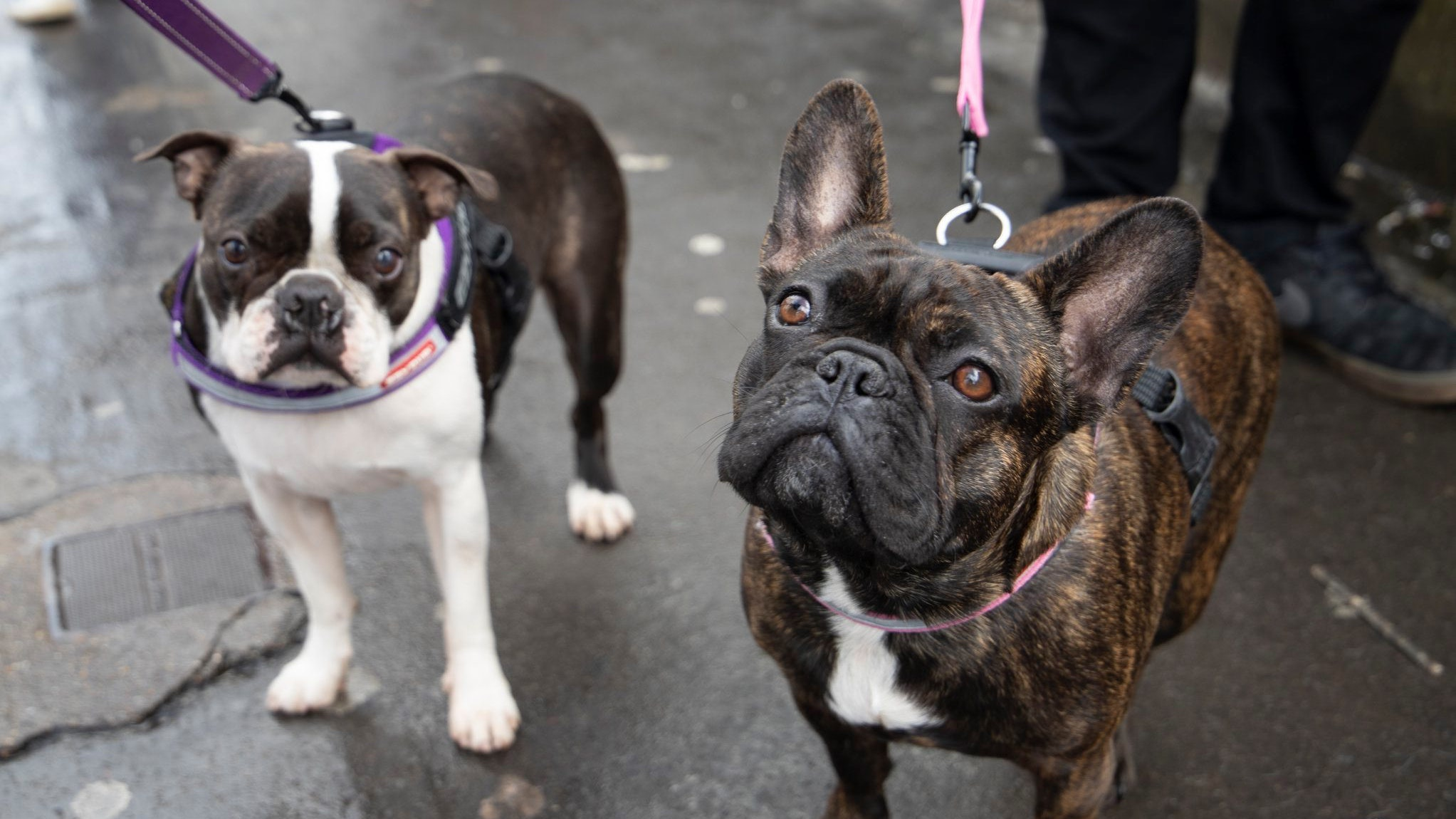 Frenchie Pup Up Cafe – Brighton