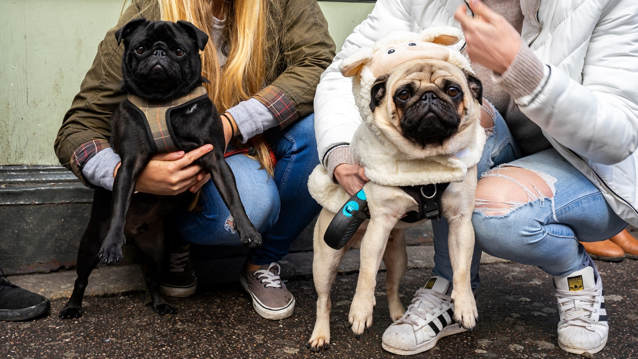 Pug Pup Up Cafe – Manchester