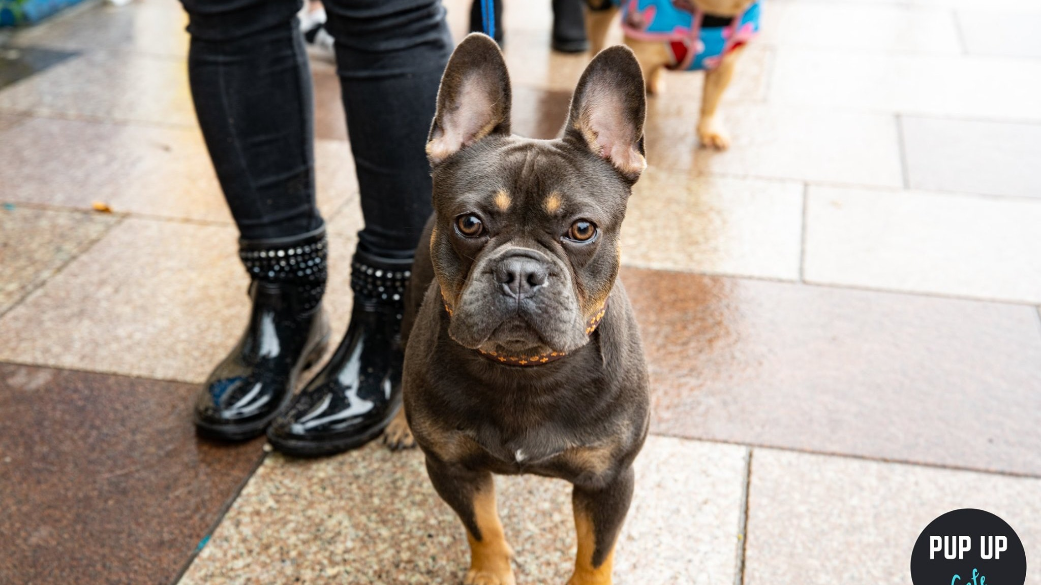 Frenchie Pup Up Cafe – Cardiff