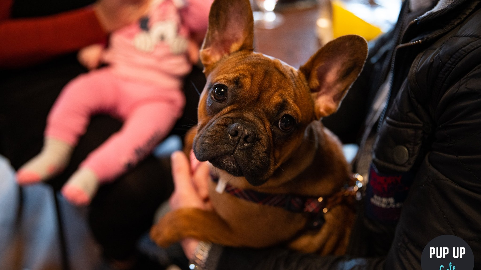 Frenchie Pup Up Cafe – Leeds