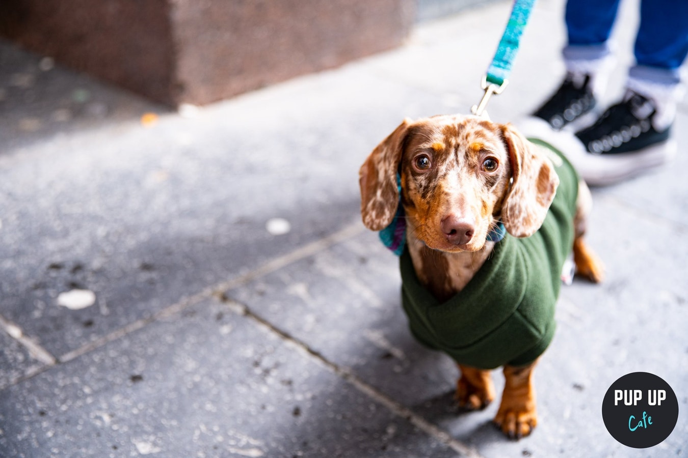 Dachshund Pup Up Cafe – Nottingham