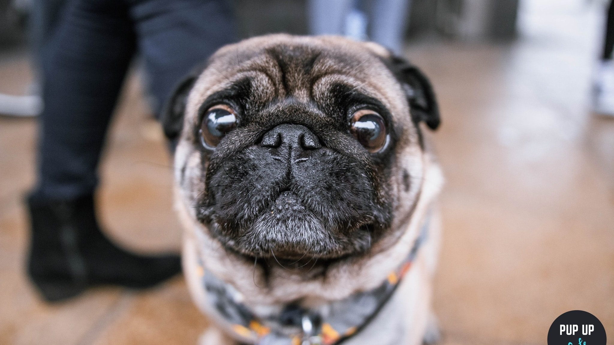 Pug Pup Up Cafe – Liverpool