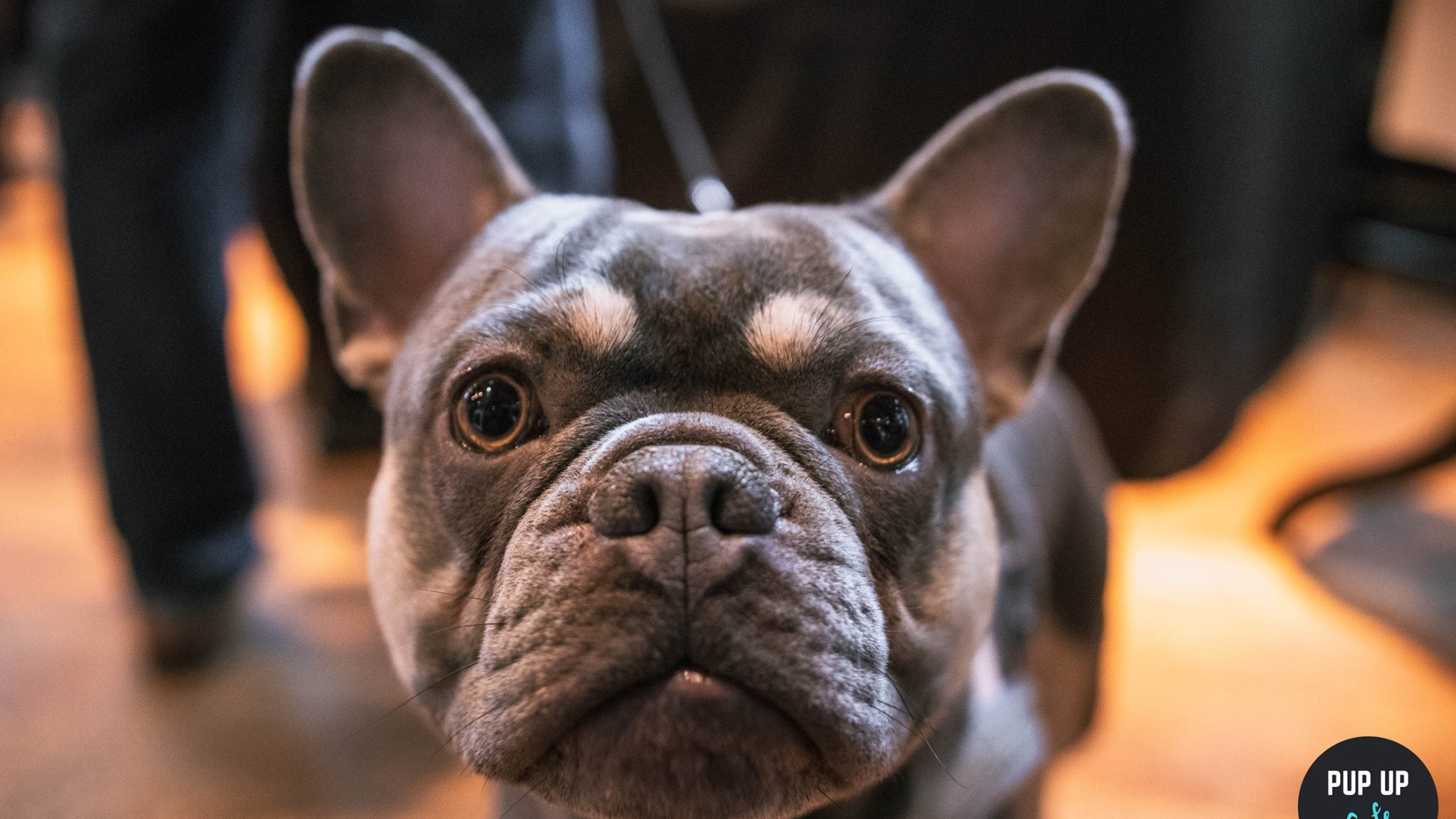 Frenchie Pup Up Cafe – Liverpool
