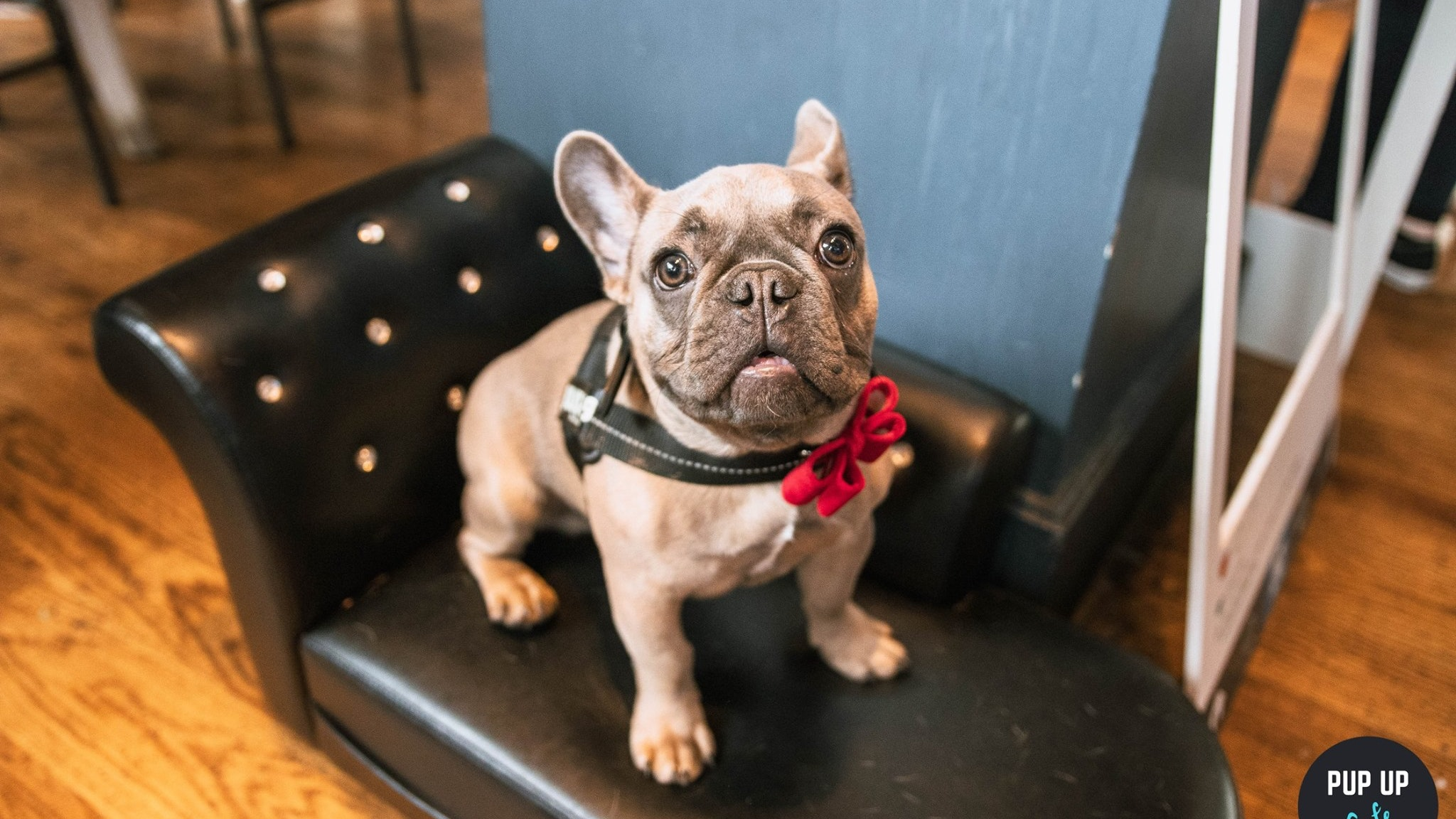 Frenchie Pup Up Cafe – Manchester