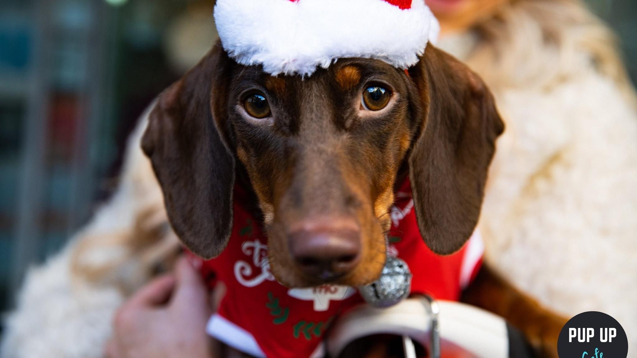 The Dachshund Christmas Tour – Durham  🤶🎄🎅